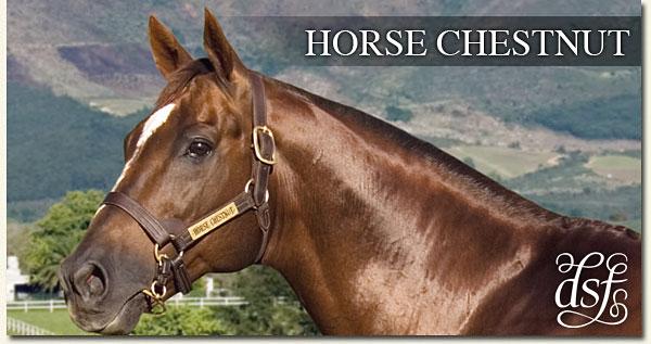 horse chestnut drakenstein stud
