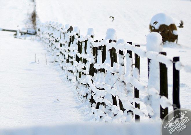 snow-august-2012-2.jpg