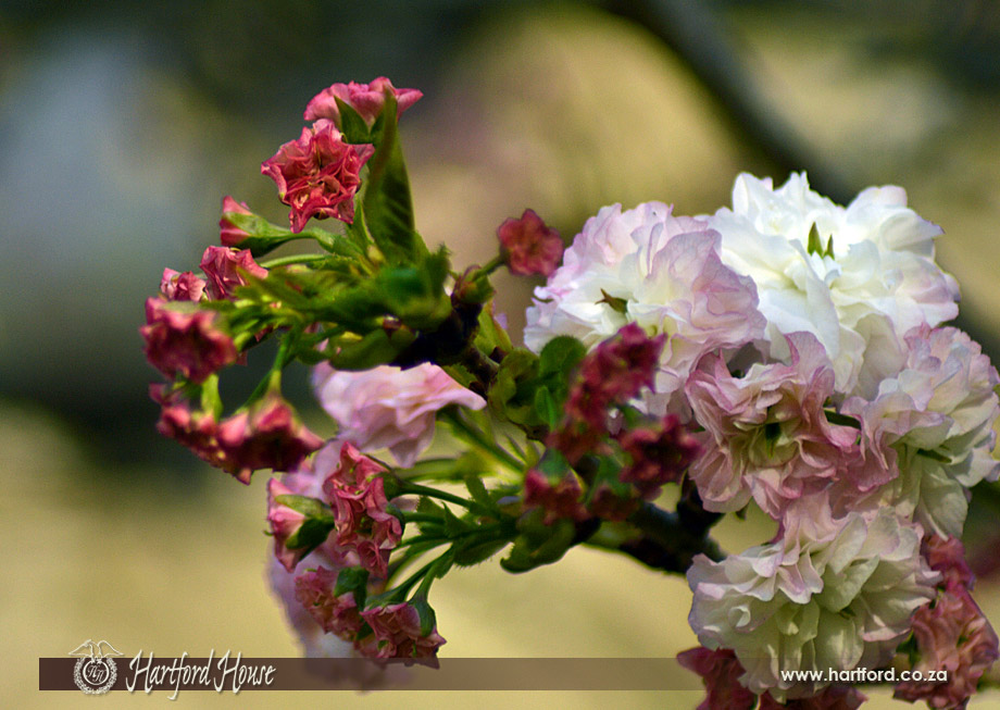 KZN Midlands Spring Flowers 16