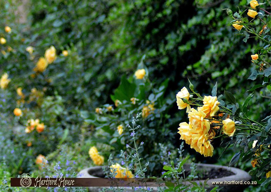KZN Midlands Spring Gardens 14