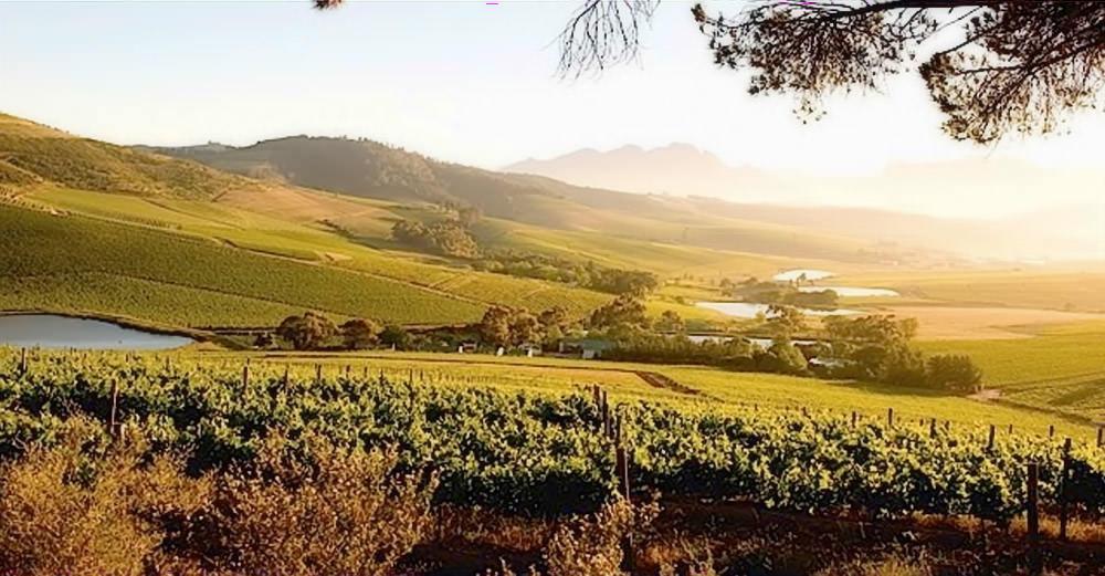Jordan Wine Estate 1