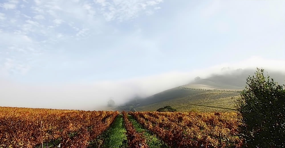 Jordan Wine Estate 2