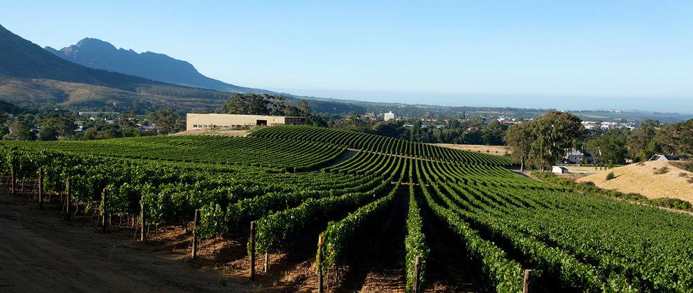 glenelly-wines-vineyards.jpg