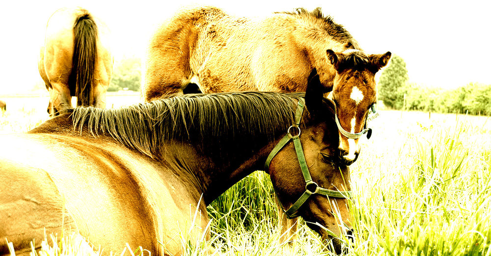Tribute & Foal / Summerhill (p)