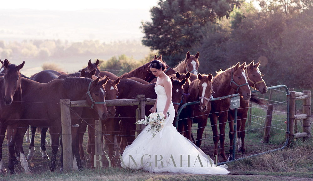 Hartford-Country-Weddings-Horses.jpg