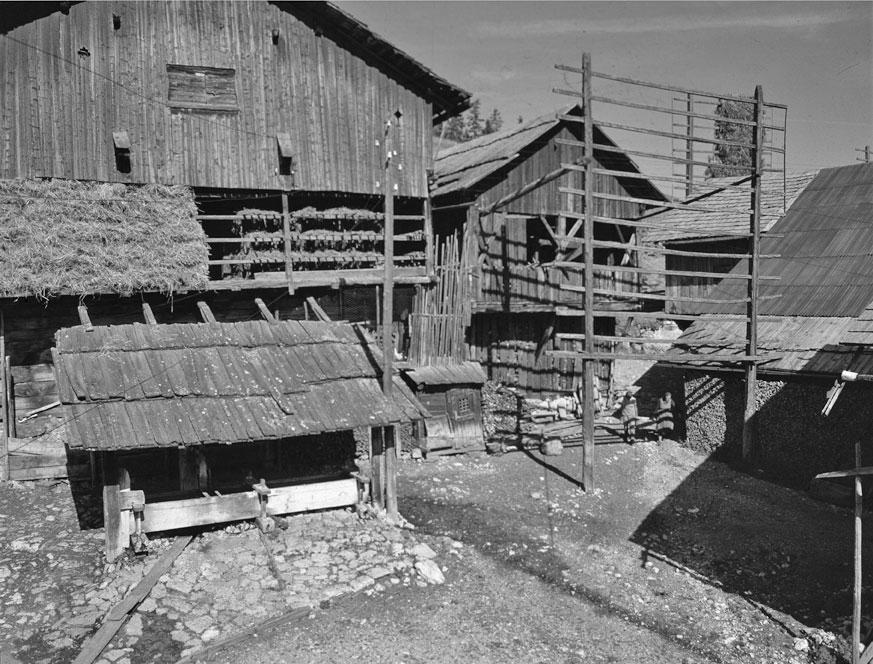 Vila Miscì (©  Istitut Ladin Micurà de Rü).