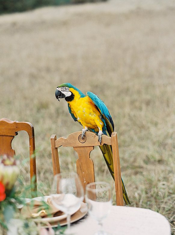 Safari Styled Wedding Parrot / Eva Moon Press