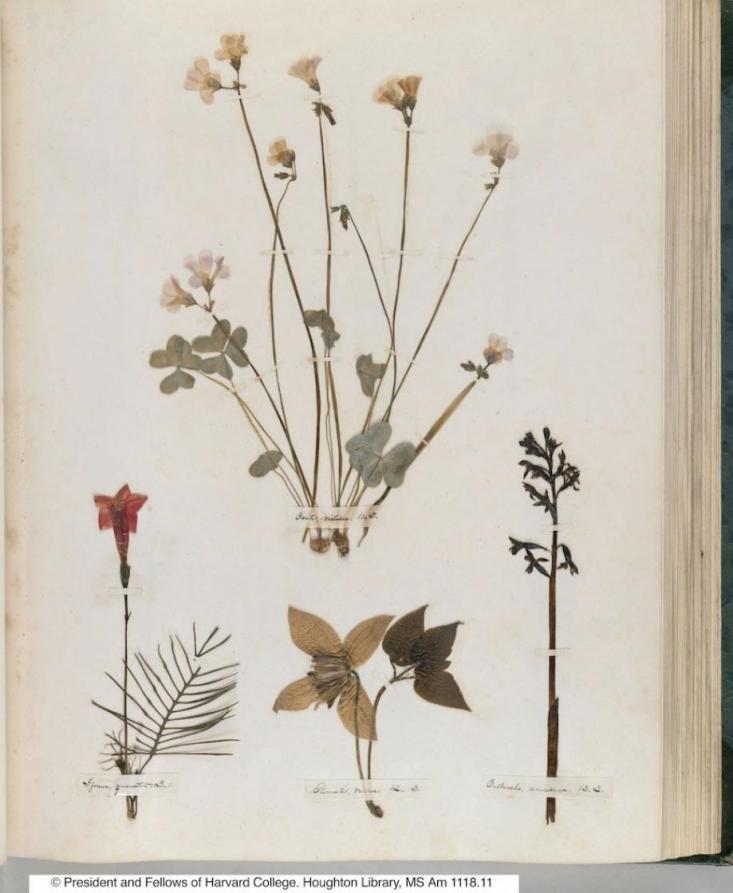 dickinson herbarium.jpg