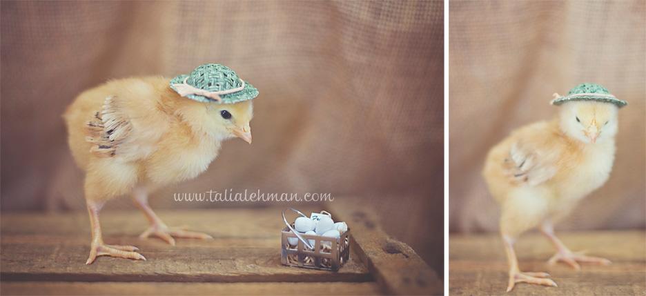 Chick&eggsWEB.jpg