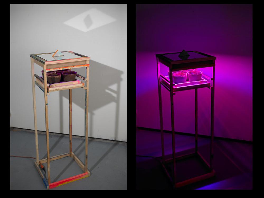 Untitled , 2011, LED grow lights, wood, paint, plants mirrors.