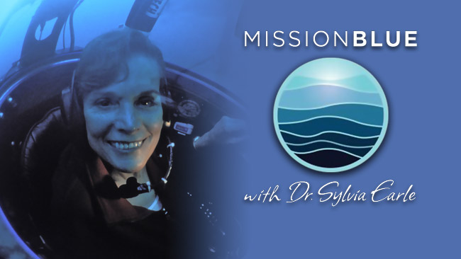 Contributor  - Mission Blue: Sylvia Earle Alliance
