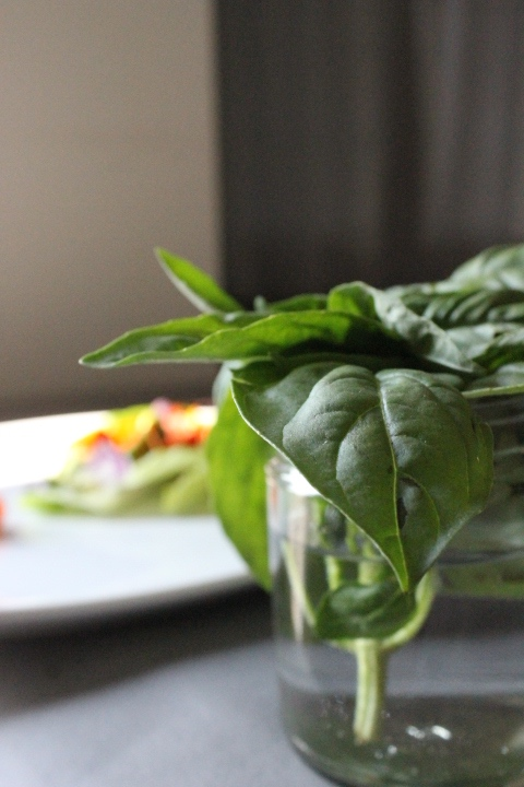 Basil, one of my fav herbs