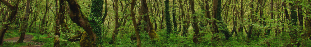 banner forest.png