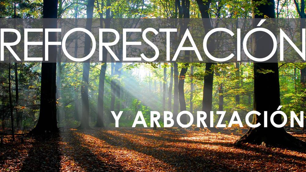reforestacion.png