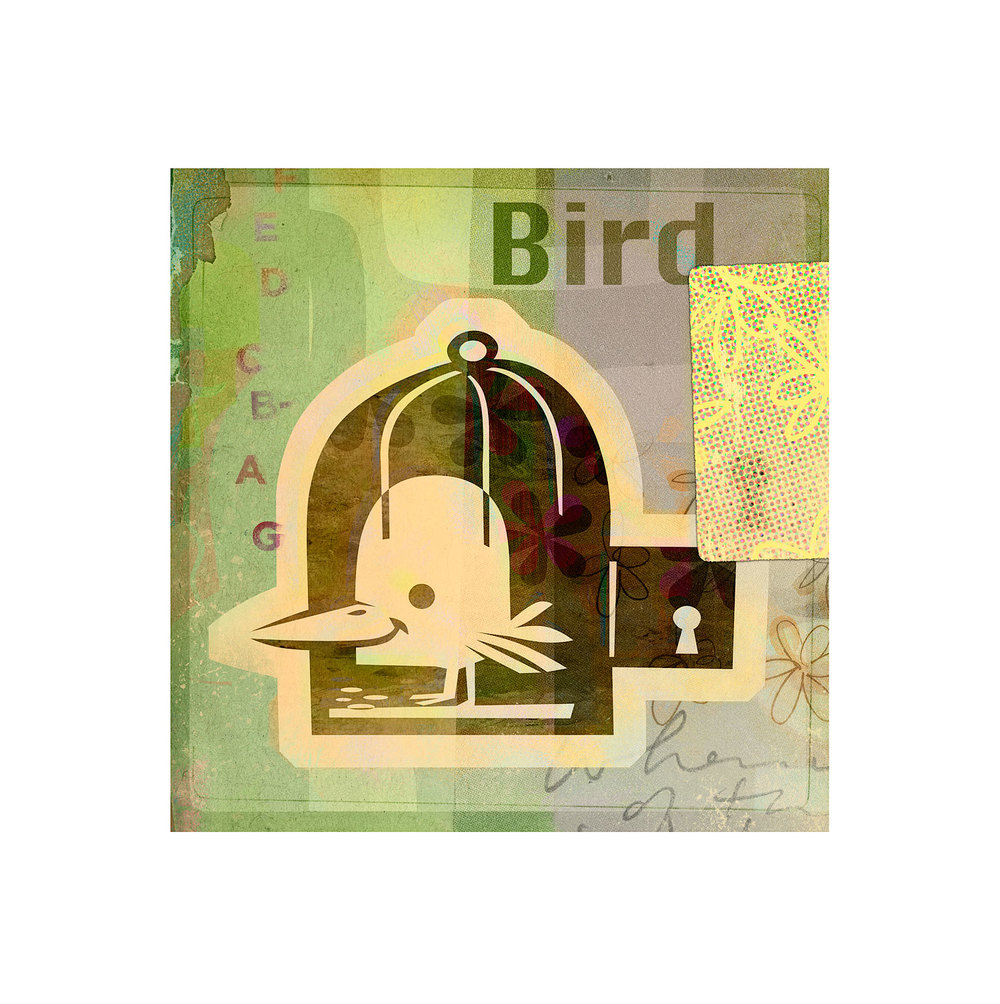 molominis_sqspc_bird.jpg