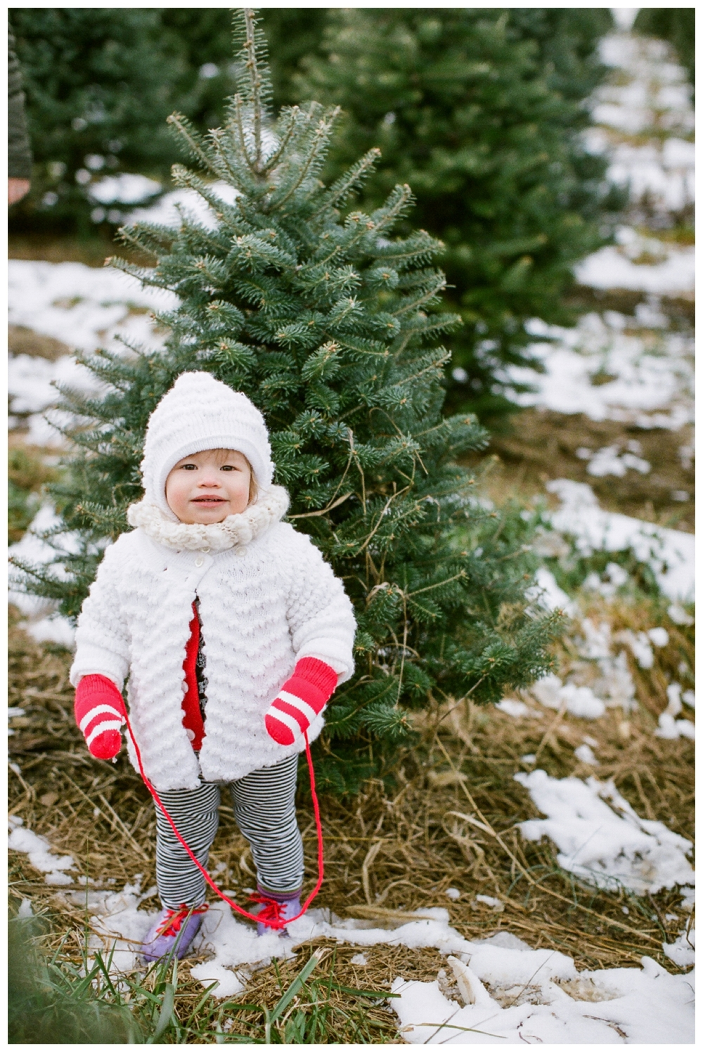 Christmas Tree Farm | Lily Glass Photography | Personal | FIlm from Richard Photo Lab