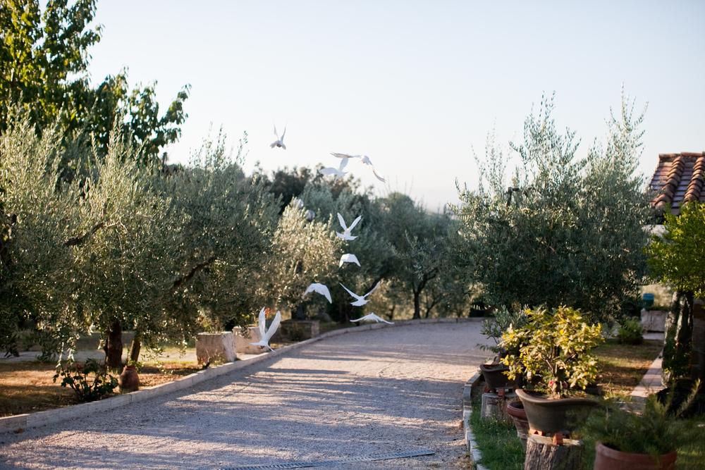 Lily Glass | Tuscany, Italy