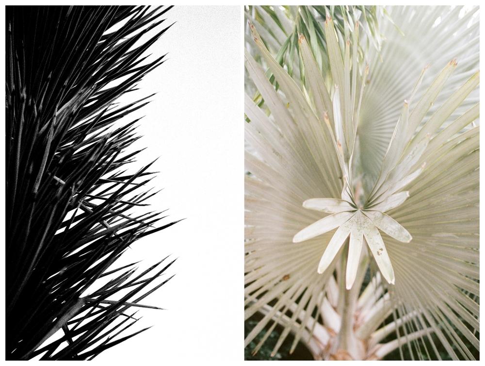 Joshua tree + St. John, USVI  | Kodak 3200 + Fuji Pro 400H film processed by RPL
