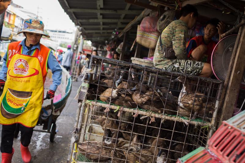 Poultry vendors.