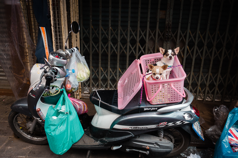 bangkok_dogs_motorcycle