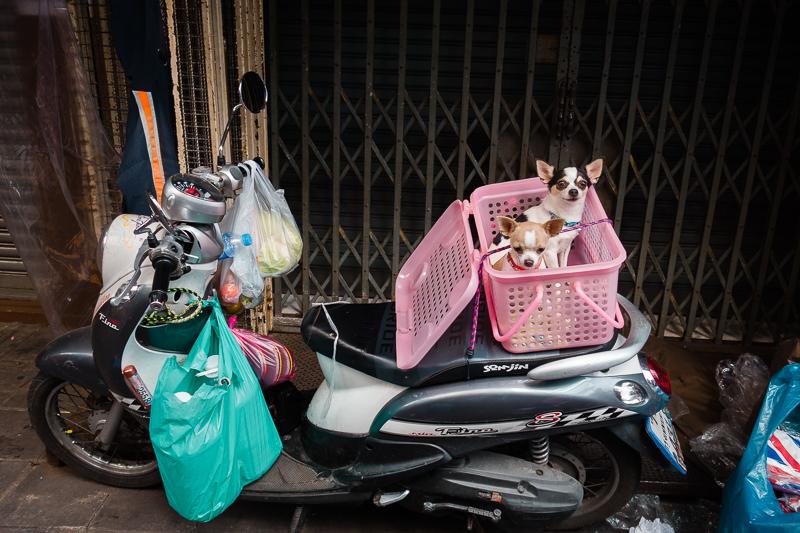 bangkok_dogs_motorcycle