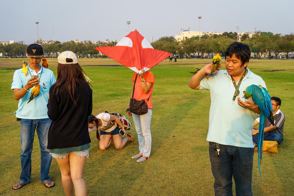 bangkok_parrots_kites