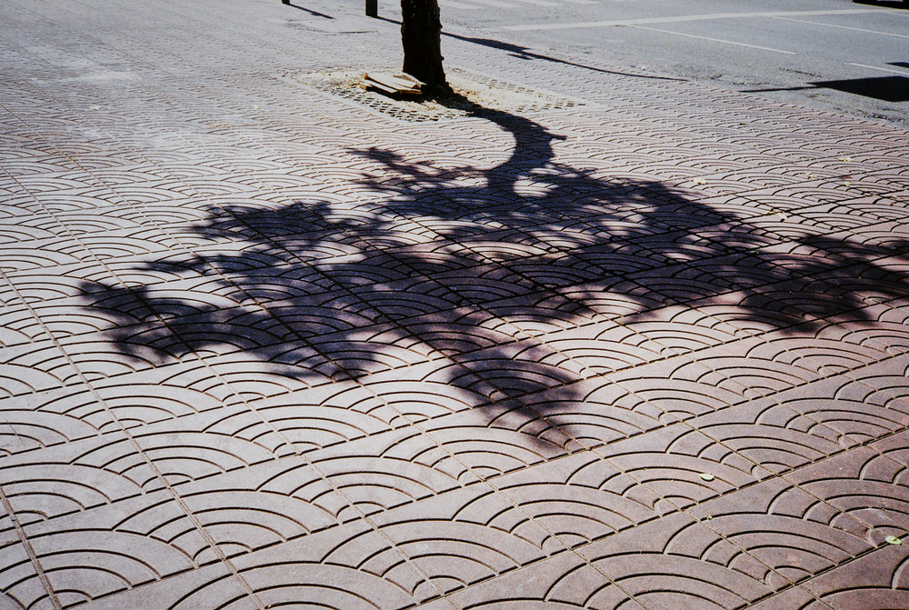 tree-shadow