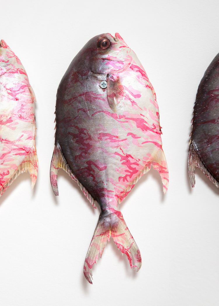 P.H.I.S.H Pink Hydrographic Integrated Fish (Detail)   2013    Piranha, hydrographic, nails