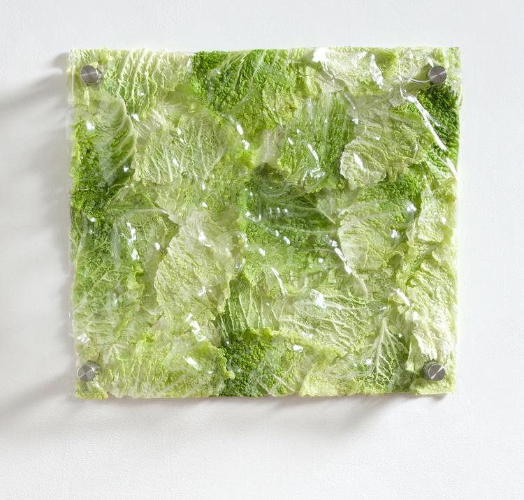 Carbon, Nitrogen, Oxygen, Water   2013    PETF plastic, cabbage, steel standoffs    19 x 22 x 2 inches
