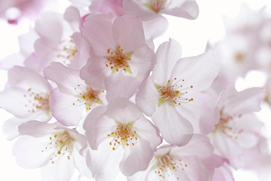 Blossoms(sm).JPG