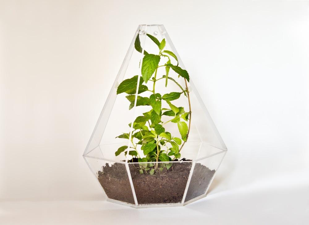 terrarium.2.jpg