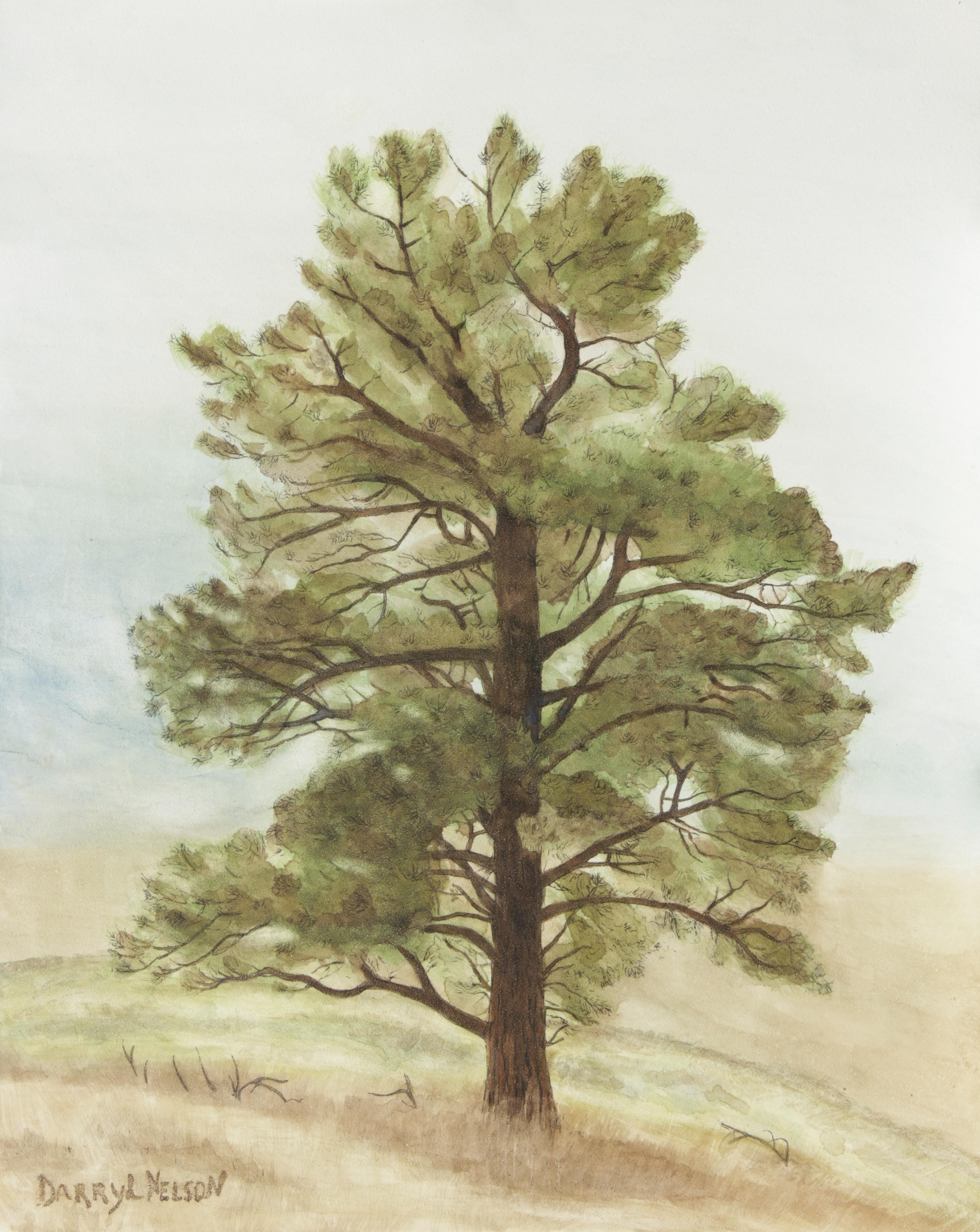 """lone pine"""