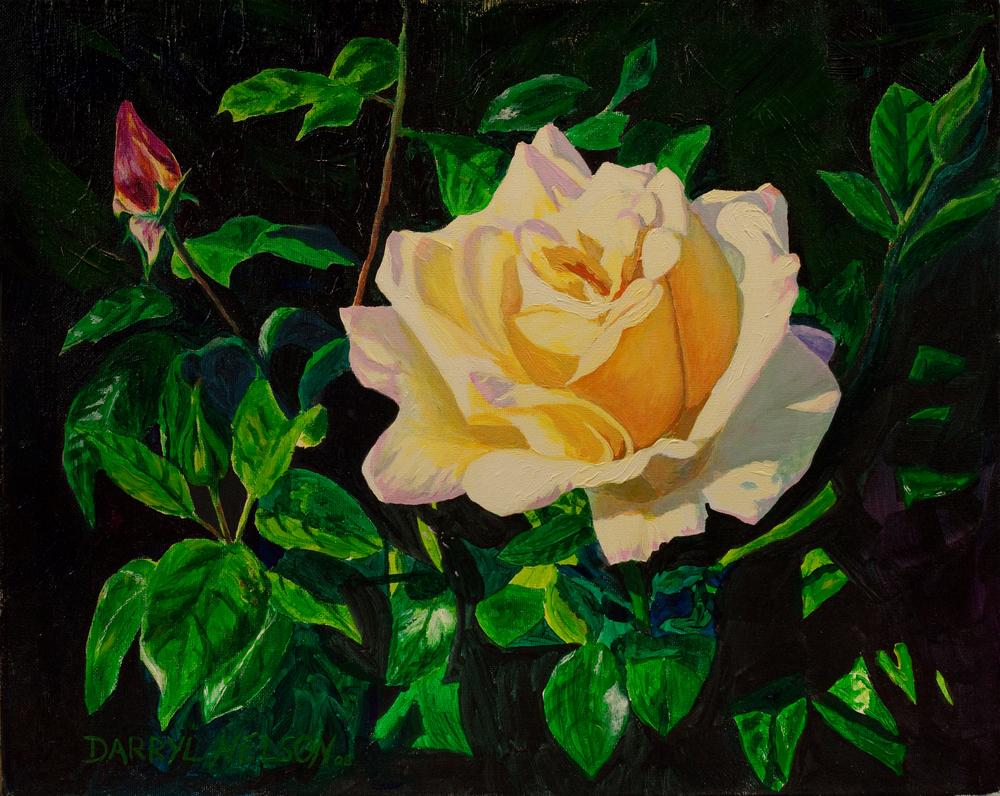 """""""Sunlit Rose"""""""