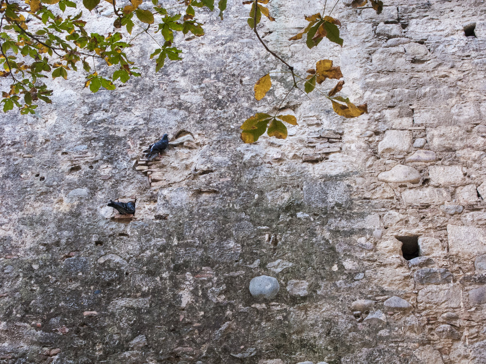 Pigeons Girona