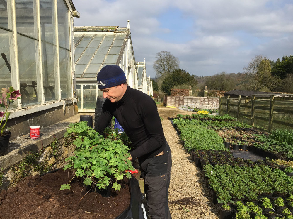 Chris Beardshaw Potting on plants for RHS Chelsea Flower Show