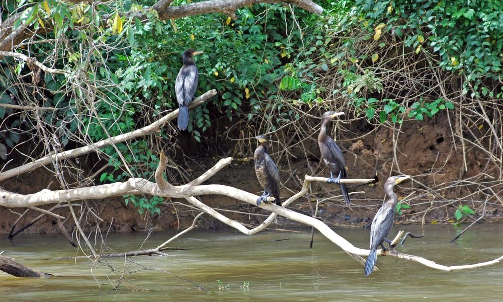 Palo Verde Birds.jpg