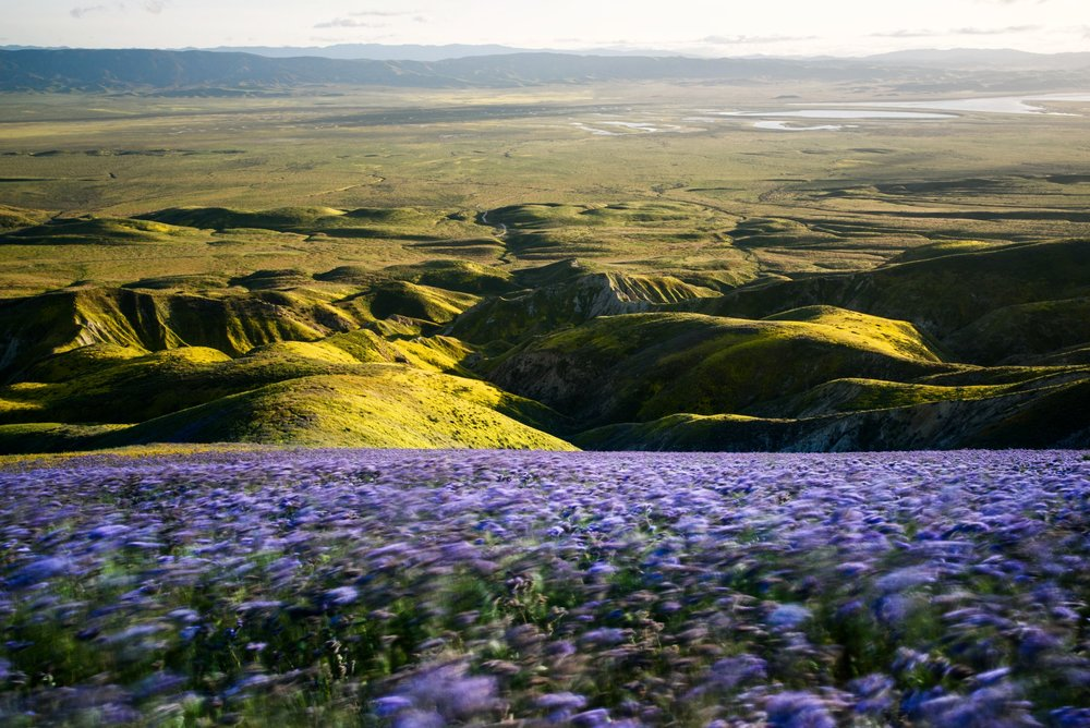 Long exposure of wildflowers on Carrizo Plain