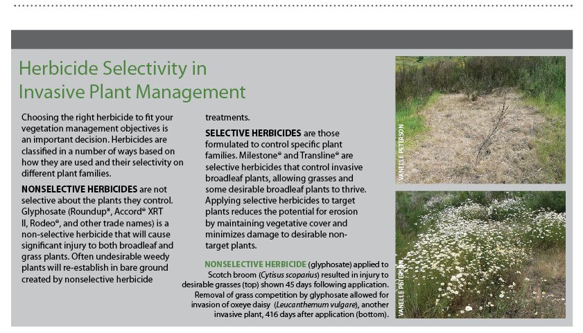 Herbicide Selectivity in Invasive Plant Management          Choosing the right herbicide to fit your vegetation management objectives is an important decision. Herbicides are classified in a number of ways based on how they are used and their selectivity on different plant families.     NONSELECTIVE HERBICIDES  are not selective about the plants they control. Glyphosate (Roundup*, Accord® XRT II, Rodeo®, and other trade names) is a non-selective herbicide that will cause significant injury to both broadleaf and grass plants. Often undesirable weedy plants will re-establish in bare ground created by nonselective herbicide treatments.     SELECTIVE HERBICIDES  are those formulated to control specific plant families. Milestone® and Transline® are selective herbicides that control invasive broadleaf plants, allowing grasses and some desirable broadleaf plants to thrive. Applying selective herbicides to target plants reduces the potential for erosion by maintaining vegetative cover and minimizes damage to desirable non-target plants.            PHOTO CAPTION: Nonselective herbicide    (glyphosate) applied to Scotch broom (  Cytisus scoparius  ) resulted in injury to desirable grasses (top) shown 45 days following application.   Removal of grass competition by glyphosate allowed for invasion of oxeye daisy  (  Leucanthemum vulgare  ), another invasive plant, 416 days after application (bottom). Photos by Vanelle Peterson.