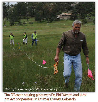 Tim D'Amato staking plots with Dr. Phil Westra and local project cooperators in Larimer County, Colorado