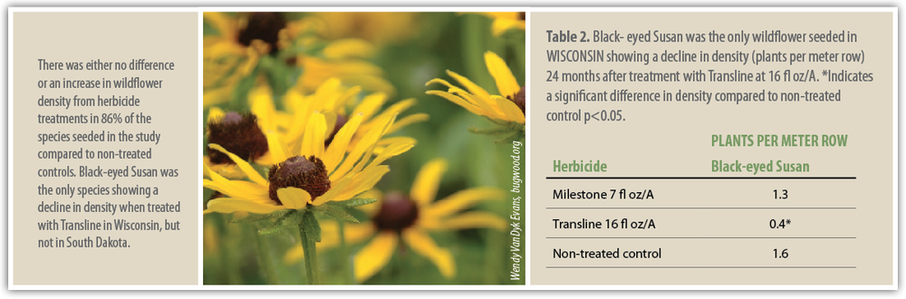 Table 2.  Black- eyed Susan was the only wildflower seeded in WISCONSIN showing a decline in density (plants per meter row) 24 months after treatment with Transline at 16 fl oz/A. *Indicates a significant difference in density compared to non-treated control p<0.05.