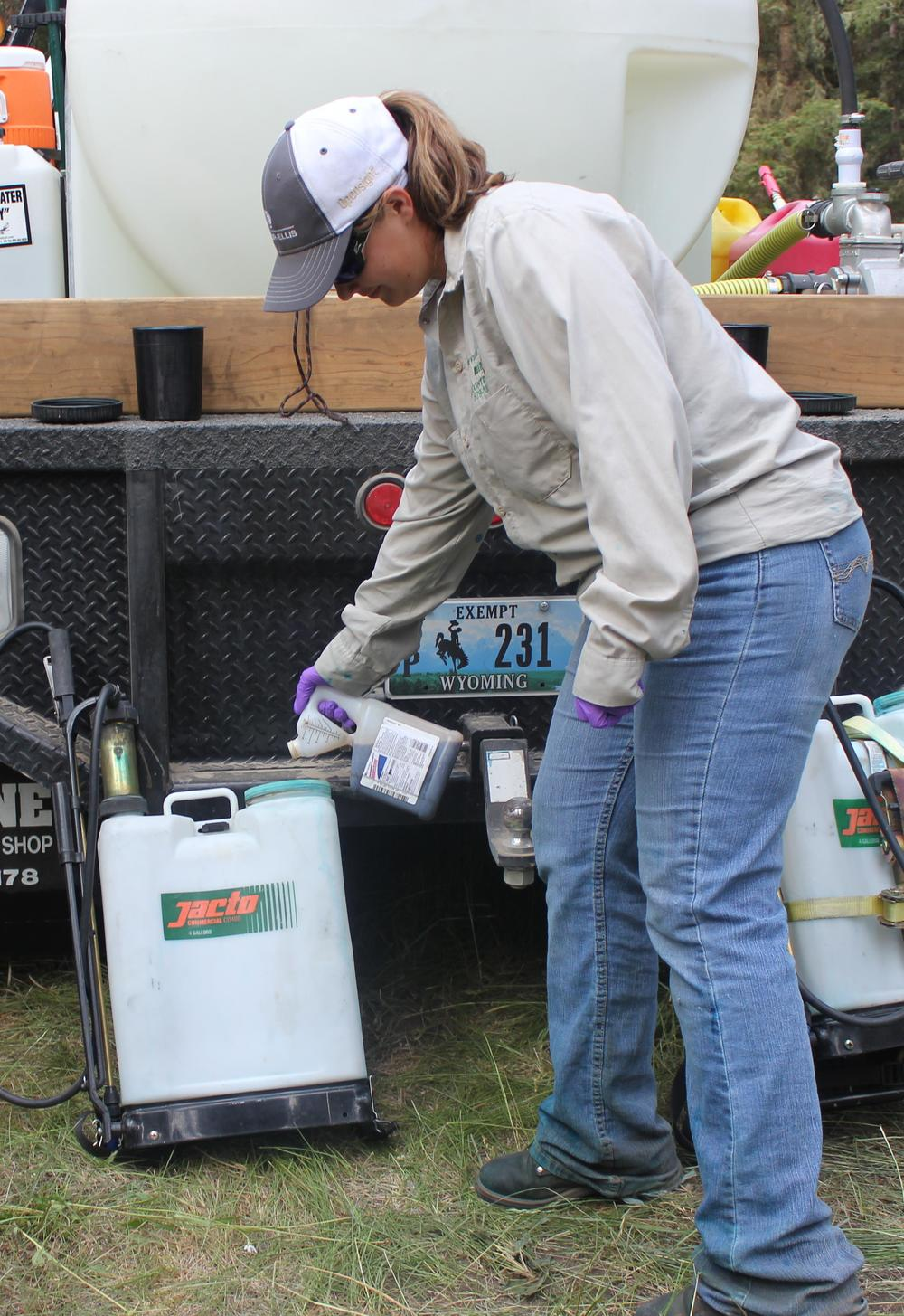 "Tasha Mohler with Bonneville County Weed District, Idaho Falls, Idaho adds Milestone® herbicide to a backpack sprayer.  Photo by Celestine Duncan .                                0     false             18 pt     18 pt     0     0         false     false     false                                                          /* Style Definitions */ table.MsoNormalTable 	{mso-style-name:""Table Normal""; 	mso-tstyle-rowband-size:0; 	mso-tstyle-colband-size:0; 	mso-style-noshow:yes; 	mso-style-parent:""""; 	mso-padding-alt:0in 5.4pt 0in 5.4pt; 	mso-para-margin:0in; 	mso-para-margin-bottom:.0001pt; 	mso-pagination:widow-orphan; 	font-size:12.0pt; 	font-family:""Times New Roman""; 	mso-ascii-font-family:Cambria; 	mso-ascii-theme-font:minor-latin; 	mso-hansi-font-family:Cambria; 	mso-hansi-theme-font:minor-latin;}"