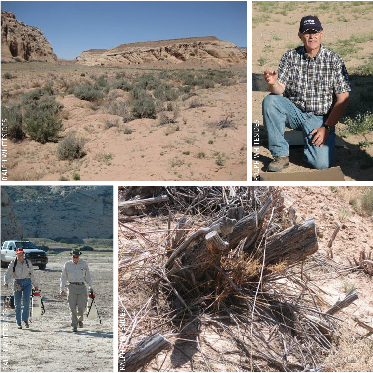 NOTICEABLE CHANGE  in the Buckhorn Wash landscape is one measure of success observed by locals who are returning to recreate in the Wash where saltcedar has been removed (top left).    RALPH WHITESIDES , Weed Extension Specialist at Utah State University demonstrates sprayer calibration methods to volunteers (top right).      VOLUNTEERS  share a laugh as they set out to search for and treat regrowth from saltcedar plants (bottom left).    FOLLOW-UP EVALUATIONS  of the site produced only one tamarisk plant out of 500 that had regrown. Most treated plants looked like this one (bottom right).