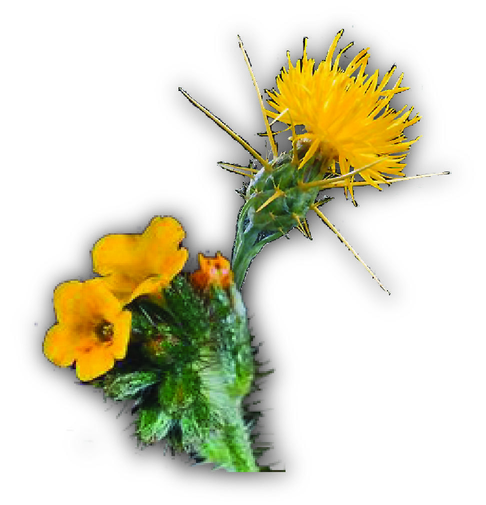 fiddleneckyst.jpg
