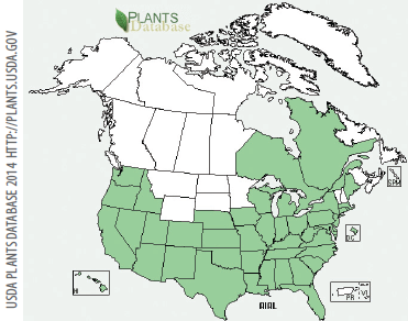 Occurrence in the United States and Canada.   Tree of heaven is naturalized throughout much of the United States.