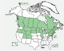 Occurrence of field scabious in the United States and Canada. USDA Plants Database 2014 (http://plants.usda.gov)