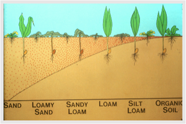 Figure 3. Schematic drawing of herbicide movement in soil (red dots) based on soil texture. Herbicide movement is greater in sand compared to silt loam or high organic matter soils. (Image source: Steve Dewey, retired, Utah State University)