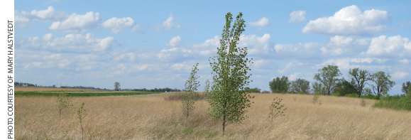 Control of scattered individual trees or other woody vegetation is best suited to low volume basal or high volume foliar treatment.