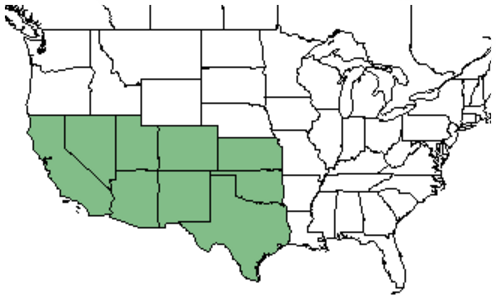 Figure 1.  Distribution of cholla in the United States  (USDA-NRCS)