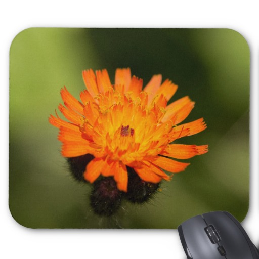 Orange Hawkweed Mouse Pad
