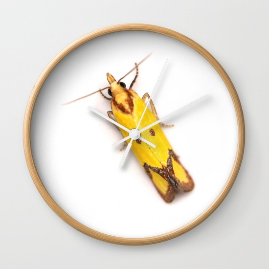 Sulphur Knapweed Moth Wall Clock